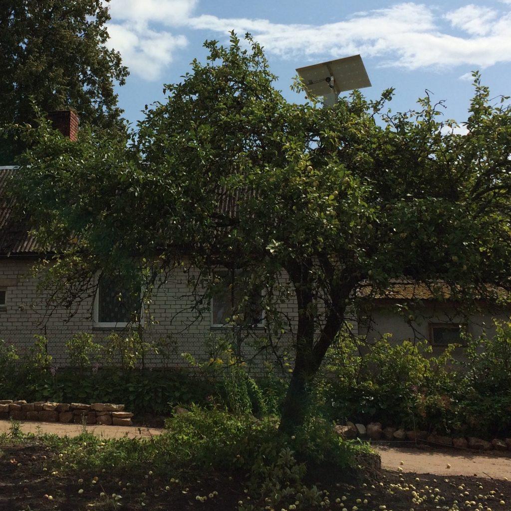 Raspberry Pi in a dummy security camera in a tree.